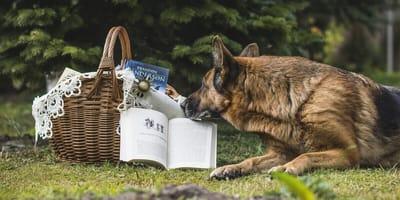 cane legge su un prato