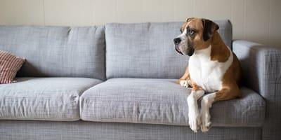 Boxer Mix: Ein Mischlingshund zum Verlieben