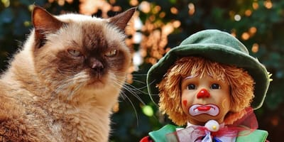 Catfest is coming to London this summer - dont miss out