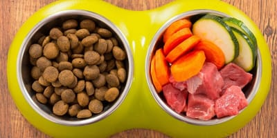 Many pet owners feed their pets a vegan diet