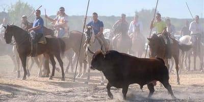 espana contra maltrato animal toro vega