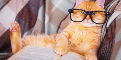 niño leyendo gato perro