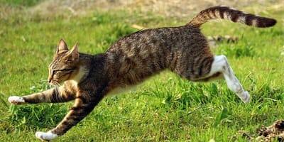 Gatto-che-scappa-sul-prato