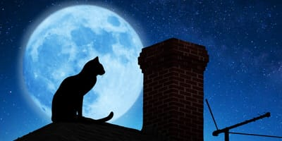 Quali effetti ha la luna piena sui gatti?