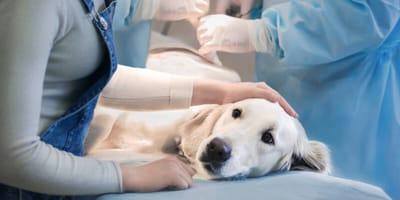 Höchste Alarmstufe beim Hund: Gefährliche Magendrehung