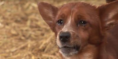 perro llora separación amiga vaca vídeo