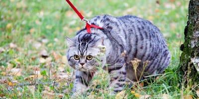 Sollte man mit der Katze an der Leine Gassigehen?