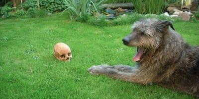 Deutschlands erster Archeo-Dog