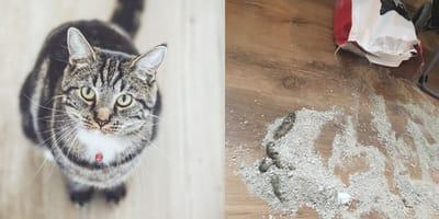 Cat spills over litter bag, poops in it anyway