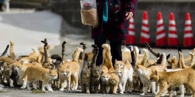 Tashirojima Island Cat