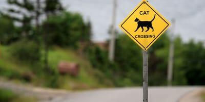 Znak drogowy z kotem.