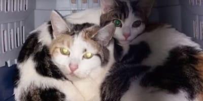 Katzenmutter mit Kind