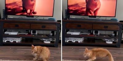 Katze vor dem Fernseher