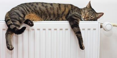kot śpi na kaloryferze