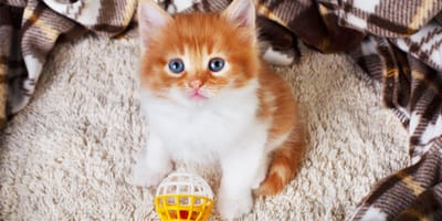 kotek w domu