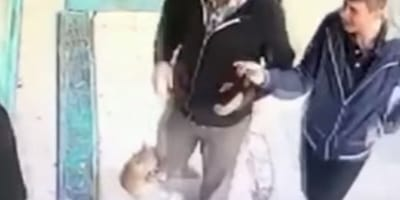 Agressive cat attacks men at marketplace in Istanbul