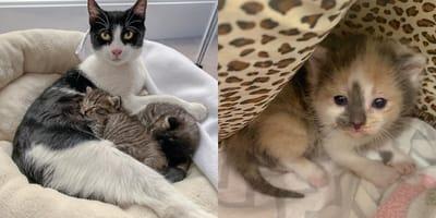 Basement cat family take in stray kitten as their own