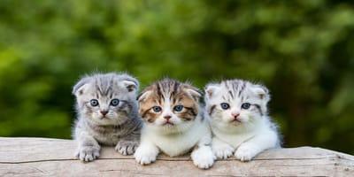 Diese Stubentiger sind die niedlichsten Katzen der Welt