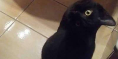 gatto nero e corvo