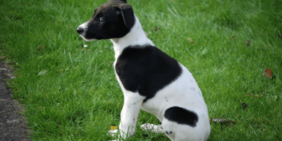 How to teach a puppy to stay?