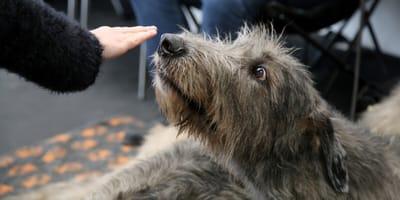 Hund schnüffelt an Hand