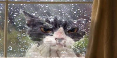fotografía curiosidad gato