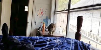 Katze auf Bett