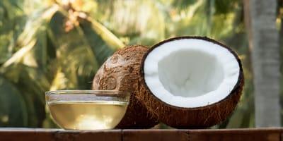 Kokosnull und Kokosöl