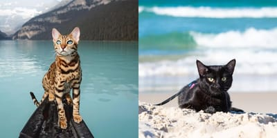 Travelling cats