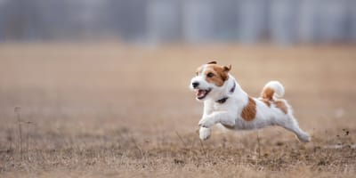 Can dogs get asthma?