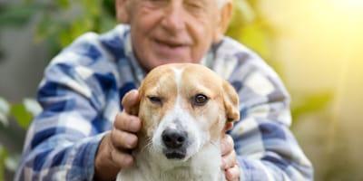 Treue Begleiter: Die besten Hunderassen für Senioren