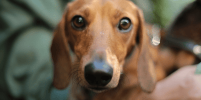 Everything you need to know about bone cancer in dogs