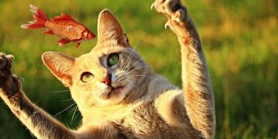 Quanto mangia un gatto al giorno? Dosi e raccomandazioni