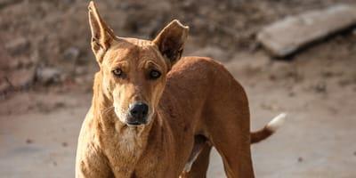 Liebe auf den ersten Blick: Einen Straßenhund aus dem Urlaub mitbringen