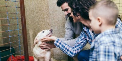 Dog with family ready for adoption