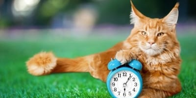 Time change this Sunday: how will it affect your dog or your cat?