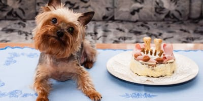 Przepisy na ciasteczka dla psa domowej roboty