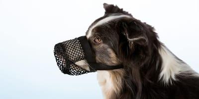 Qnti Giftköder Maulkorb beim Hund