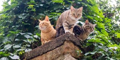Drei Katzen auf der Mauer