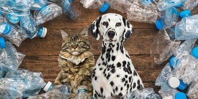 Un gato y un perro que cuidan el medio ambiente