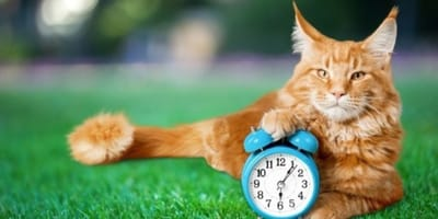 zmiana czasu kot