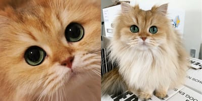 Smoothie the most photogenic cat in the world and other famous felines!