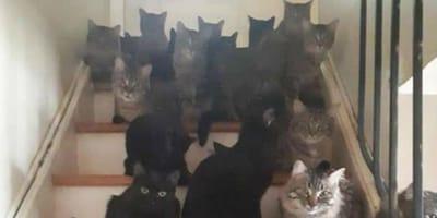 Una asociación salva a 30 gatos que se estaban muriendo de hambre en un apartamento