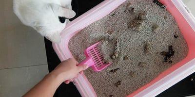 Aprende cómo limpiar el arenenero de tu gato