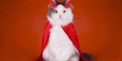gatto vestito da diavolo