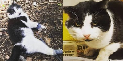 Cat found in Essex with legs gaffa taped together
