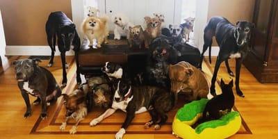 Co czeka te sędziwe psy? Na szczęście ktoś o nich myśli!