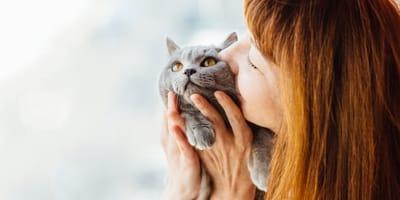 ¿Por qué bufan los gatos? Significado del bufido en distintas situaciones