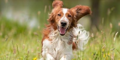 Daran erkennen Sie, ob Ihr Hund bei Ihnen glücklich ist