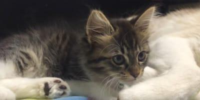Osierocone kocięta znalazły nową mamę. Nikt się nie spodziewał, kto nią zostanie!
